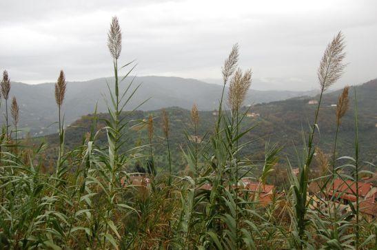 Montecatini Alto view
